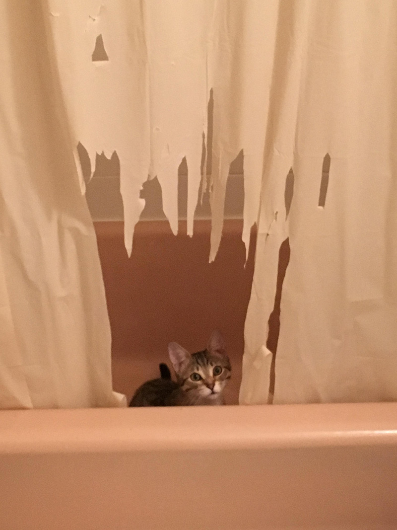 What Do You Get When Combine An Overly Energetic Kitten With Unsuspecting Shower Curtain Well Here Go The Last Photo Is Absolute BEST
